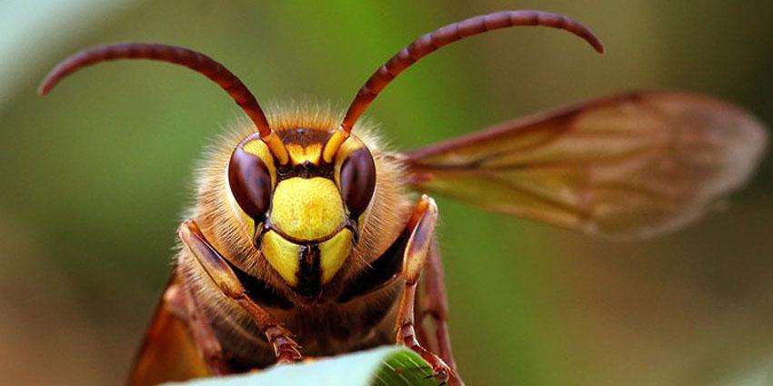 Schädlingsbekämpfung für Fluginsekten